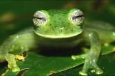 Ivic realizará curso sobre ecología de los anfibios en Los Teques