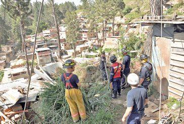 Hermanitos quedaron atrapados en su casa tras caída de pino