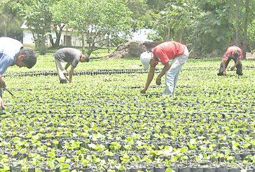 Piden más producción a agricultores