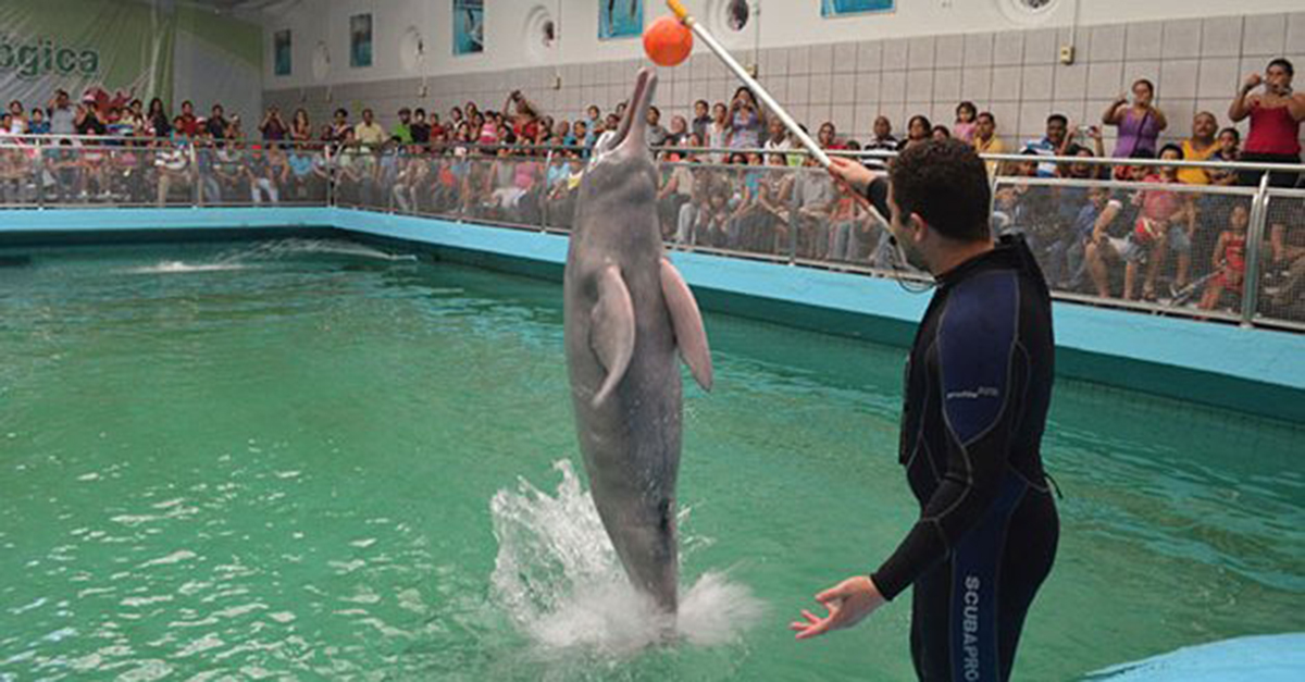 Zeus la tonina del Acuario de Valencia falleció este jueves después de su entrenamiento