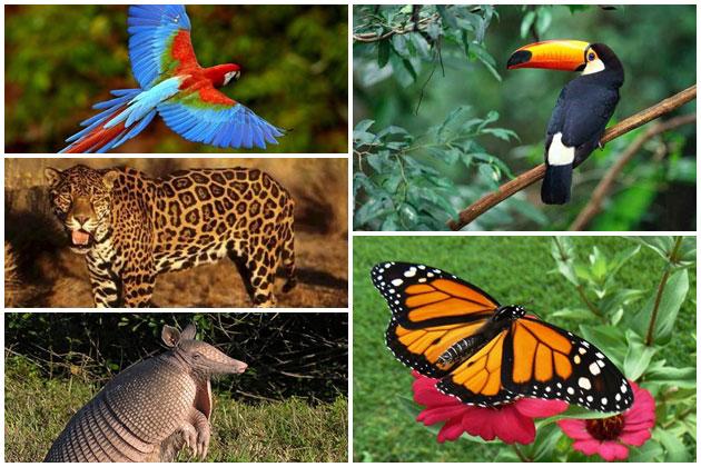 """Estas son algunas maneras de ayudar a conservar la vida silvestre """"Ayudalos"""""""