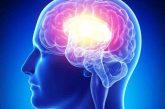 Tecnologías de la imagen podrían revelar profundidades del cerebro