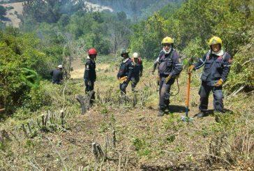 Bomberos de Miranda construyen líneas de defensa contra el fuego en Chile