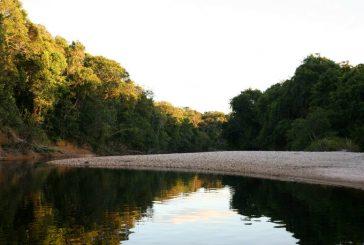 Yutajé: Un tesoro ecológico del Sur de Venezuela