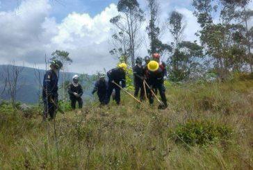 Bomberos de Miranda realizaron cortafuegos en Parque Nacional Macarao