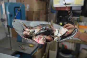 Costo del pescado salado  deja tiesos a usuarios