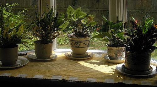 Los impresionantes beneficios de tener plantas en la casa