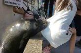 León Marino arrastra al agua a niña en muelle de Vancouver