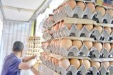 Se incrementa costo de los huevos