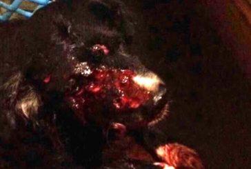 Cross, el cachorro herido se debate entre la vida y la muerte