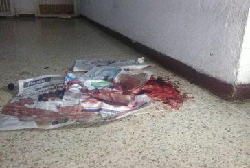 Confirmaron muerte de Cross, perrito herido en operativo policial en El Paraíso
