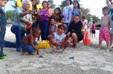 Liberan a 55 ejemplares de tortugas en Nueva Esparta