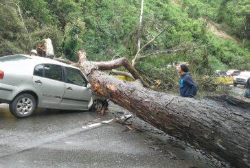 Un lesionado deja caída de árbol en la PNM