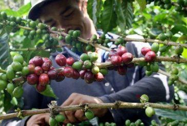 Precio del café será establecido y publicado en Gaceta Oficial