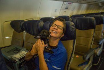 Southwest Airlines envió un avión para rescatar decenas de perritos y gatitos del huracán
