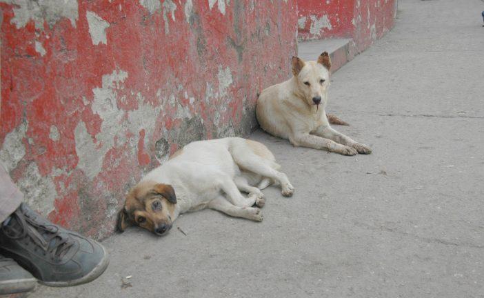 Solicitan refugio para canes  en el municipio