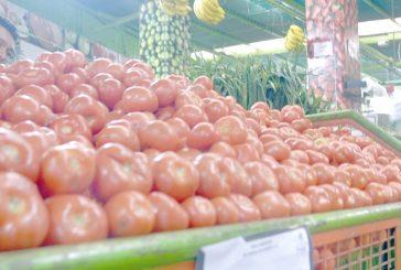 Se requieren tres días de trabajo para comprar un kilo de tomate