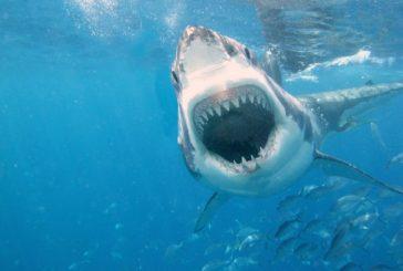 Joven murió por un ataque de tiburón frente a sus amigos en Cuba