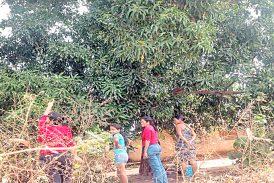 Adolescente embarazada falleció al caer de una mata de mango