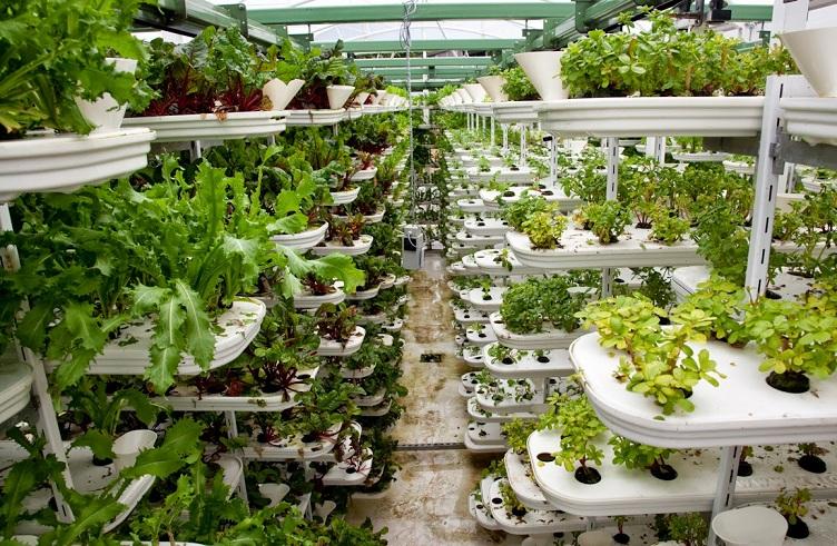 Las granjas urbanas: sembrando en túneles y edificios