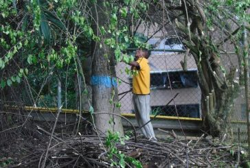 Más de 150 espacios verdes recuperó Fundación Los Teques