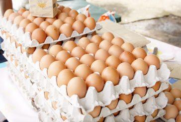 Cartón de huevos se montó en Bs. 1 millón 600 mil