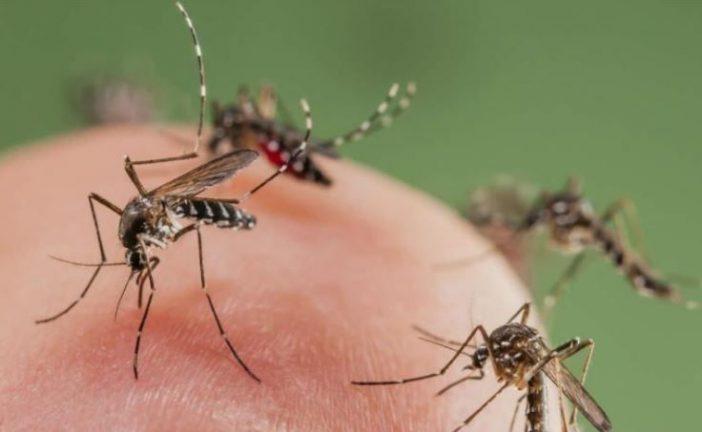 Brasil desarrolla mosquito transgénico para lucha contra especie portadora del dengue