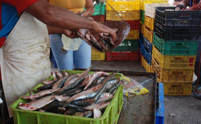 Pescado salado y fresco superan con creces salario mínimo