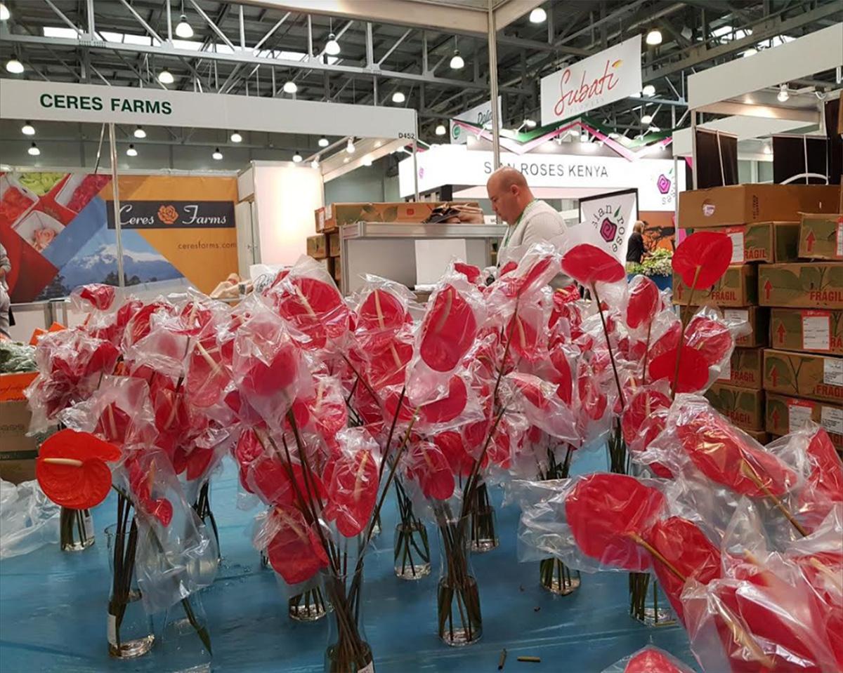 Acentúan exportación de flores producidas en Altos Mirandinos