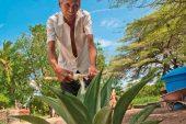 La Estancia presenta Primer  Festival de Agave Cocuy 2018