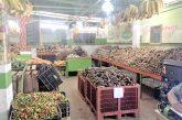 Venden verduras y frutas frescas en feria